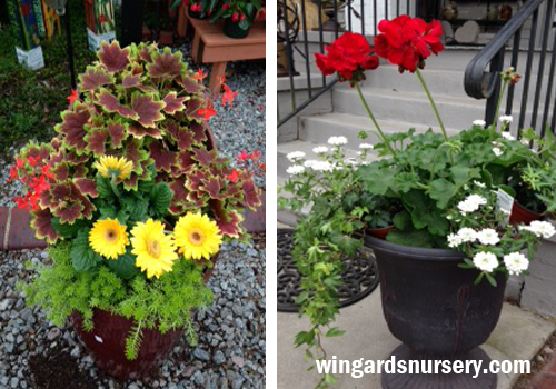 Container Gardens for Small Spaces