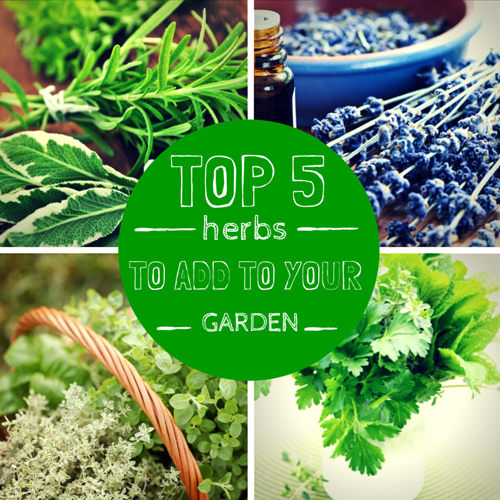 Top 5 Herbs to Add to Your Garden