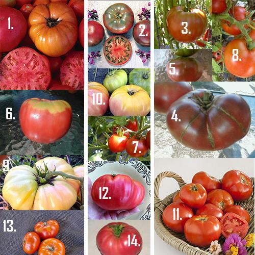 Clic Heirloom Tomato Varieties