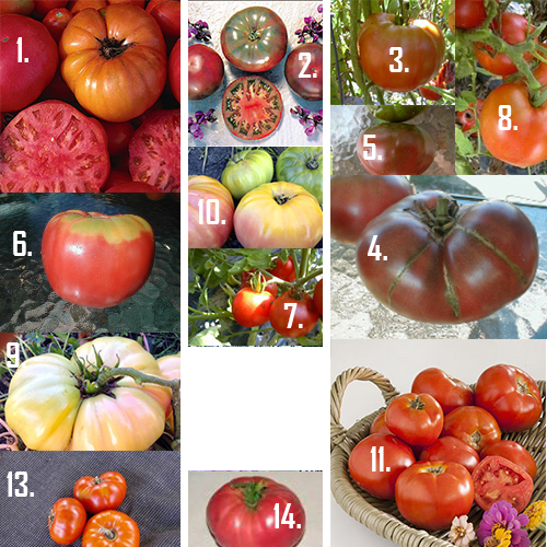 Classic Heirloom Tomato Varieties
