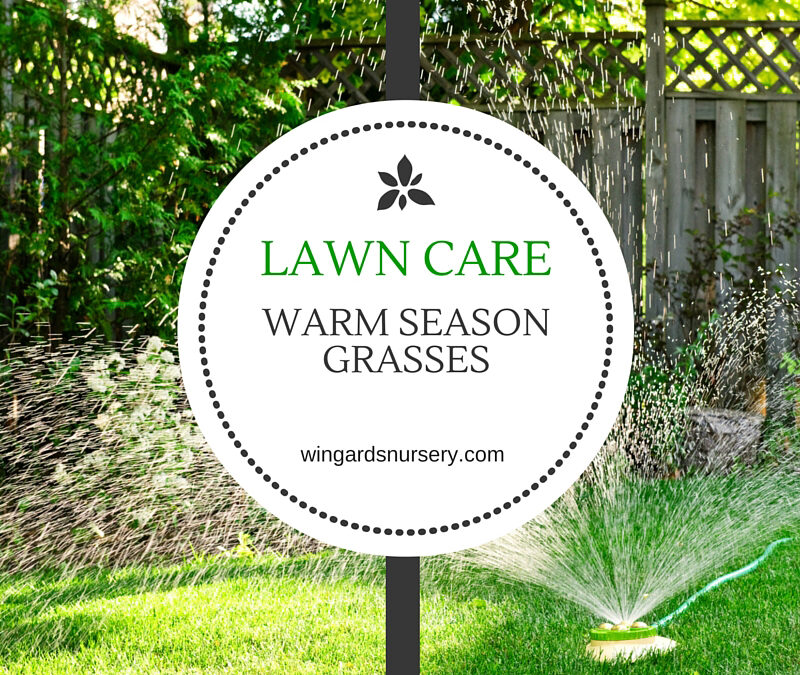 Lawn Care for Warm Season Grasses