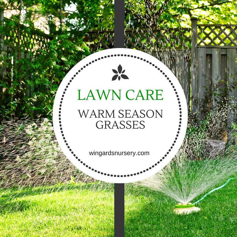 Lawn-Care-for-Warm-Season-Grasses