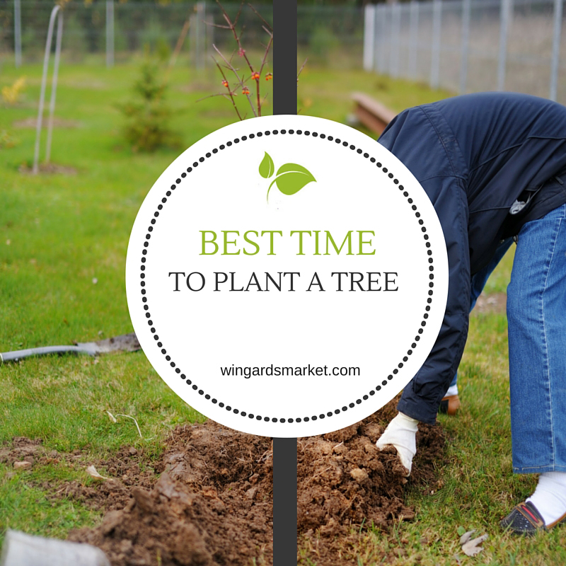 When is the best time to plant a tree?