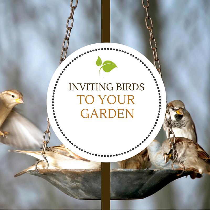 Inviting Birds to Your Garden