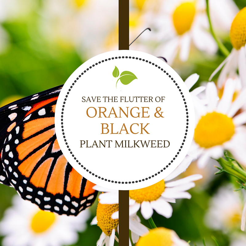 Save the Flutter of Orange & Black