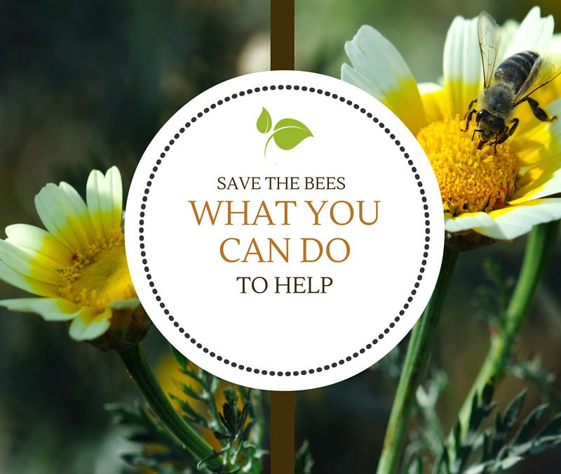 Save the Bees – What you can do to help.