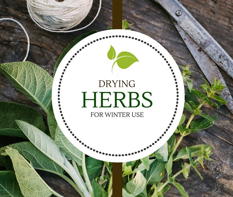 Drying Herbs for Winter Use