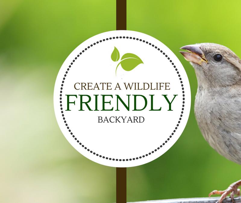 Create a Wildlife Friendly Backyard