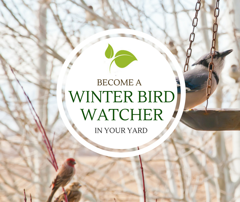 Become a Winter Bird Watcher