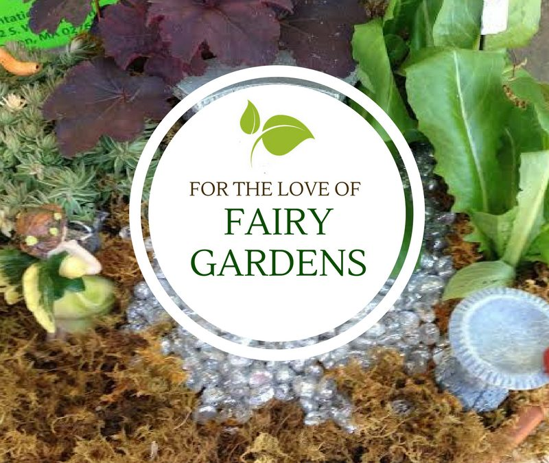 For the Love of Fairy Gardens