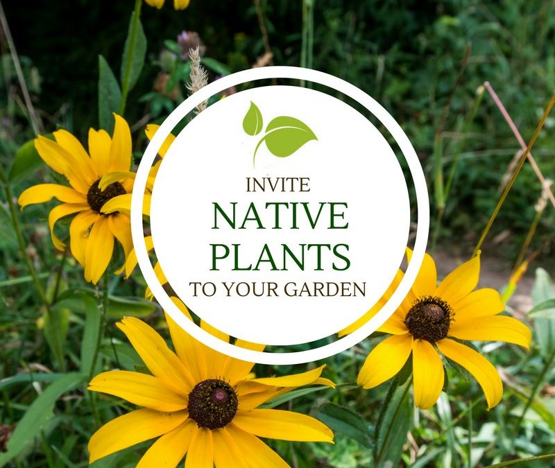 Invite Native Plants to Your Garden