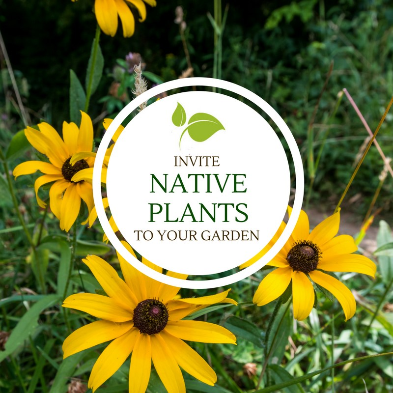 Native Plants Garden