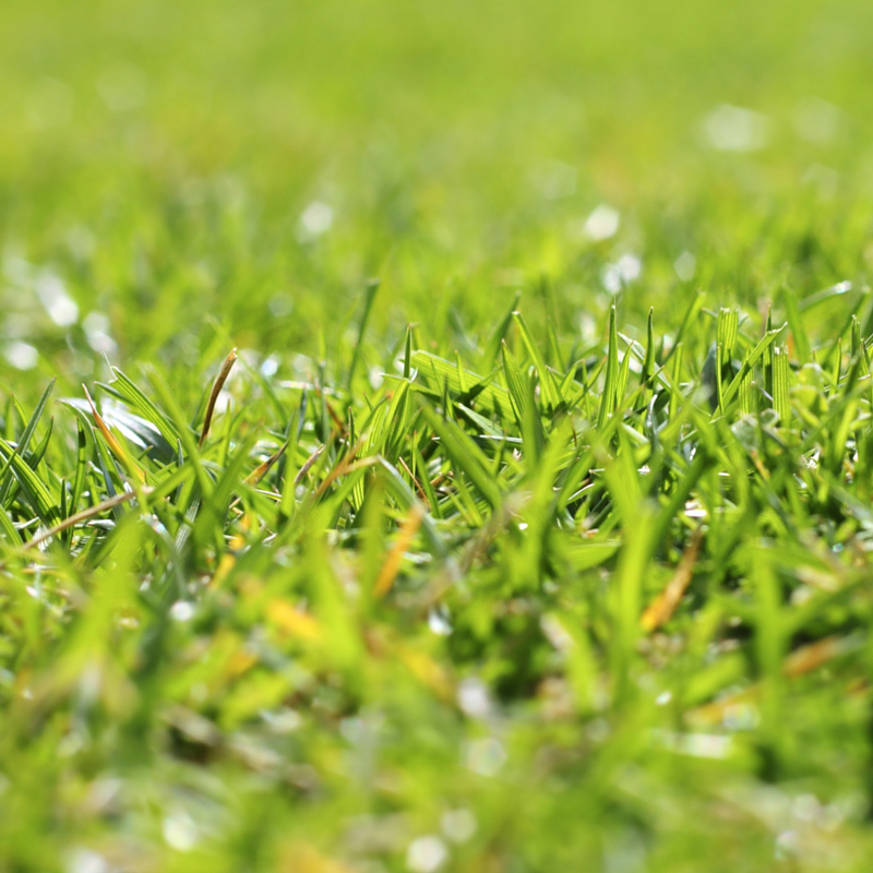 Do it yourself lawn care workshop do it yourself lawn care workshop saturday solutioingenieria Gallery