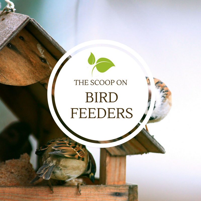 The Scoop on Bird Feeders