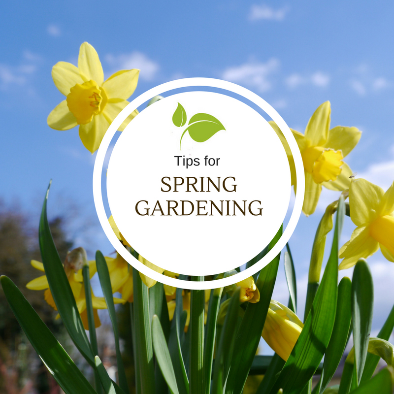 It Happens Every Year. Tips For Spring Gardening