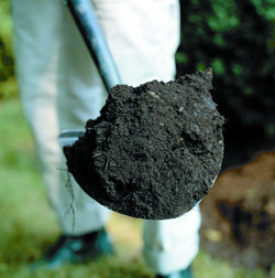 The Dirt on Soils